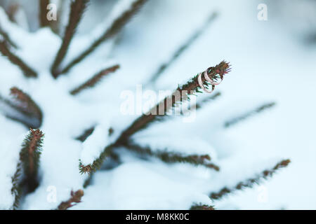 Trauringe aus Gold auf den Zweigen der Weihnachtsbaum im Winter im Schnee. - Stockfoto