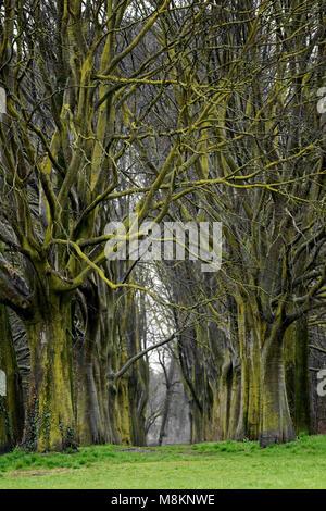 Bäume Pfad in den Wald - Stockfoto