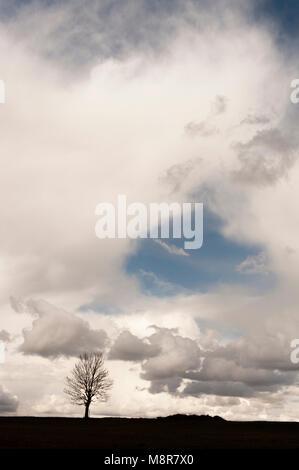 Baum stehend durch sich selbst in der Nähe von Murat in der Winterlandschaft des Cantal in Auvergne, Frankreich