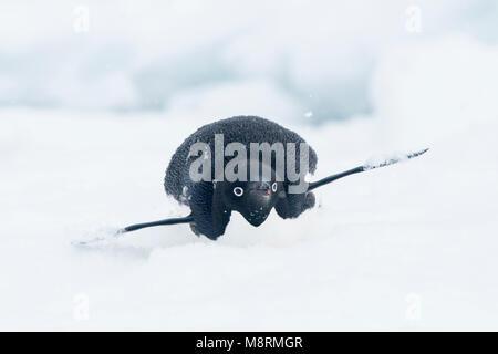 Schnee fällt auf ein Adelie Pinguin, wie Sie Folien an der Spitze eines Eisbergs auf seinem Bauch, auch bekannt - Stockfoto