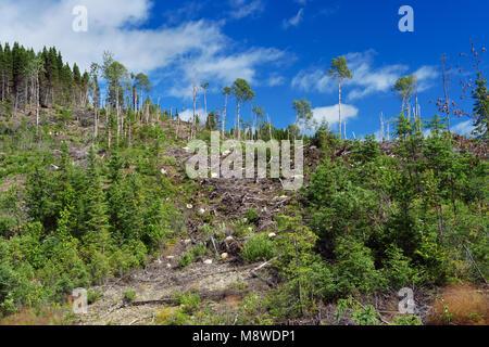 Überreste einer Protokollierung in den Monts Valin, Provinz Quebec, Kanada. - Stockfoto