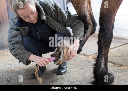 Besitzerin in stabilen Reinigung Füße von Pferd mit Bürste - Stockfoto