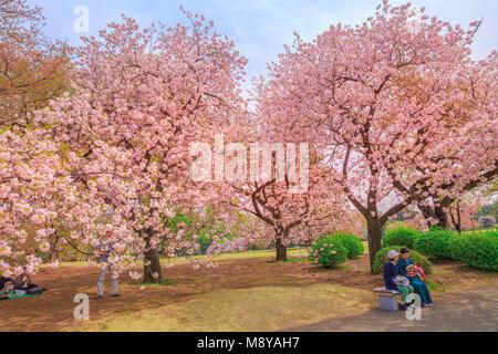 Tokyo, Japan - 17. April 2017: die Menschen entspannen unter blühenden Kirschbaum in Shinjuku Gyoen National Garten. - Stockfoto