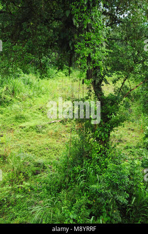 epiphytischen pflanzen stockfoto bild 22606133 alamy. Black Bedroom Furniture Sets. Home Design Ideas