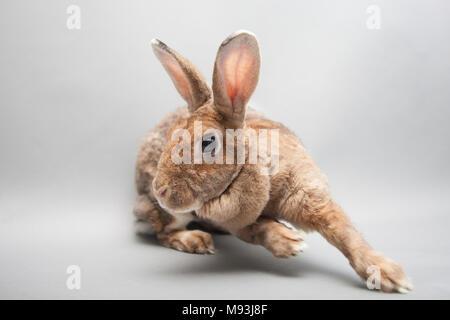 Schnell laufende Bunny rabbit auf eine nahtlose hellen Hintergrund - Stockfoto