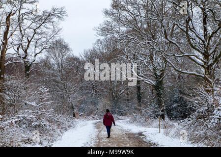 Frau auf einem schneebedeckten Weg in den New Forest National Park, Hampshire, England - Stockfoto