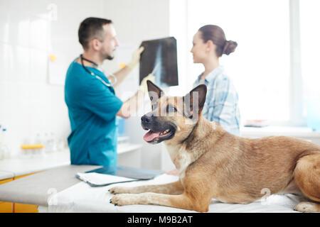 Pet-vet besuchen - Stockfoto