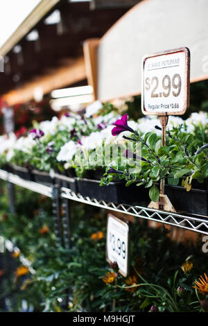 Gartencenter Baumschule Pflanzen mit Preisschildern im frühen Morgenlicht angezeigt. - Stockfoto