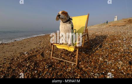 Ein Hund sitzt im gelben Liegestuhl auf Hove Beach genießen Sie die Seeluft. - Stockfoto