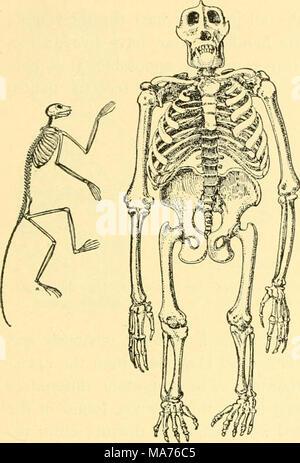 . Elementare Biologie; eine Einführung in die Wissenschaft des Lebens.