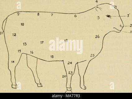Wunderbar Rinder Anatomie Diagramm Galerie - Anatomie Von ...