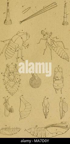 . Eine Lektüre in die Entomologie: oder der Naturgeschichte der Insecten. - Stockfoto