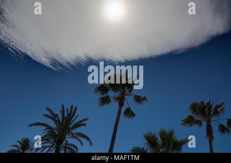 Palmen Silhouette gegen einen blauen Himmel mit ungewöhnlicher Wolkenbildung und eine trübe Sonne. - Stockfoto