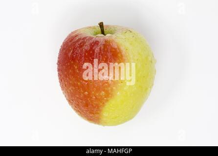 Süße, Saftige Royal Gala Apfel mit Wassertropfen auf einem weißen Hintergrund - Stockfoto