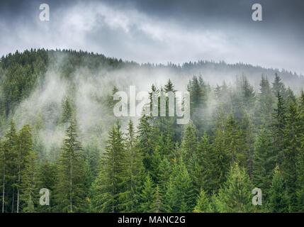 Sonnenaufgang über misty Kiefernwald am Hang in einem Naturschutzgebiet. - Stockfoto