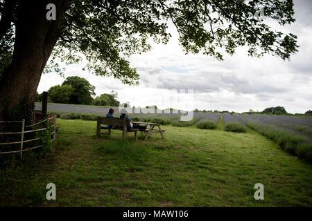 Die Menschen sind auf der Bank sitzen, mit Blick auf die Lavendelfelder in der Mayfield Lavender Farm im Banstead, Surrey, England, UK. - Stockfoto