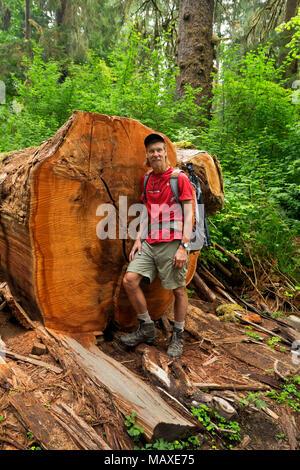 WA 15010-00 ... WASHINGTON - die leuchtenden Farben eines frisch geschnittenen Wald Riese, der über den Hoh River Trail in Olympic National Park gefallen war. - Stockfoto