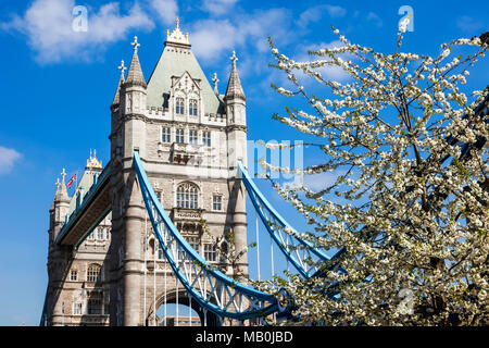 England, London, Southwark, Tower Bridge, Spring Blossom - Stockfoto