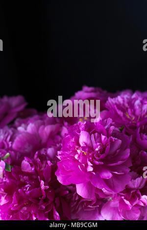 Burgunder, Rot, leuchtend rote Päonien - Blumenstrauß auf schwarzem Hintergrund - Stockfoto
