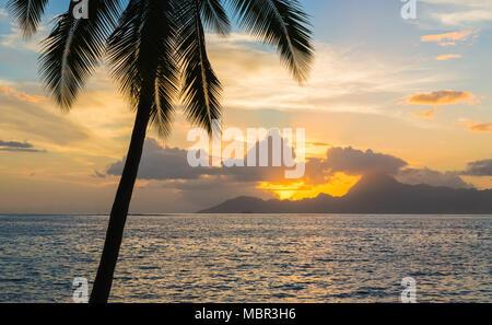 Silhouette von tropischen Palmen bei Sonnenuntergang. Moorea Berg im Hintergrund. Romantische Ferien Konzept.