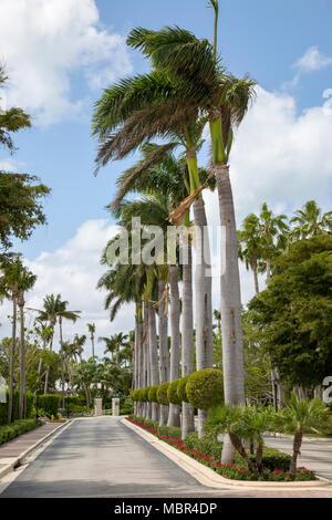 Palmen gesäumten Straße in Key Biscayne, Florida. - Stockfoto