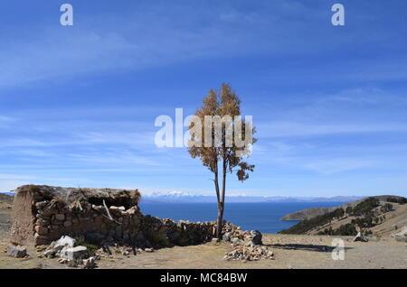 Baum neben alten kleinen Hütte aus Stein mit Reetdach auf der Isla del Sol im Titicaca-see in Bolivien. Die Insel ist ein beliebtes Ausflugsziel. - Stockfoto
