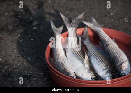 Vier nur frischen Fisch in einem orange bowl auf der Straße, Istanbul, Türkei gefangen - Stockfoto