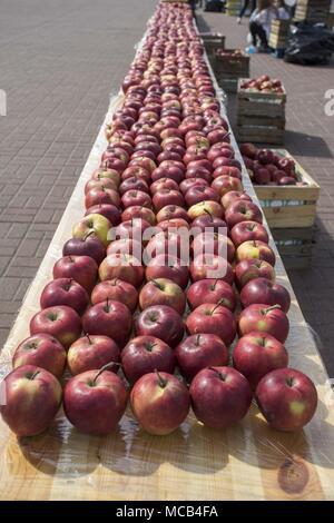 Posen, Großpolen, Polen. 15 Apr, 2018. 11 PKO Poznan Halbmarathon. Im Bild: Äpfel für die Läufer. Credit: Dawid Tatarkiewicz/ZUMA Draht/Alamy leben Nachrichten - Stockfoto