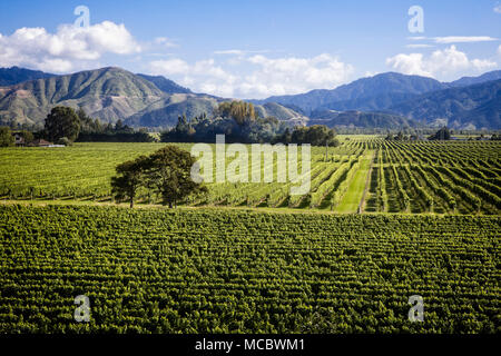 Die Weinberge der Region Marlborough, Südinsel, Neuseeland. - Stockfoto