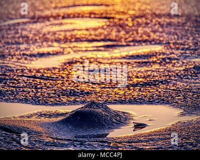 Glänzend kaltem Eis Stücke auf klare Eis. Die Struktur der natürlichen Eis in selektiven Fokus Foto. Lebendige Farben von Polar Sonnenuntergang. - Stockfoto