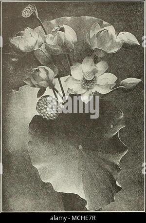 Fein Weeds Mit Weißen Blumen Zeitgenössisch - Kleider und Blumen ...