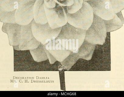 Niedlich Lotus Blume Färbung Seite Galerie - Beispiel Anschreiben ...