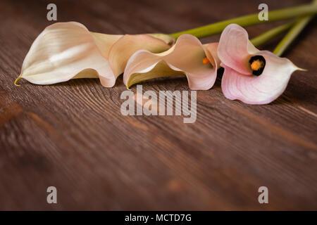 Calla auf hölzernen Hintergrund, Postkarte oder Hochzeit Einladung Konzept, getönt - Stockfoto