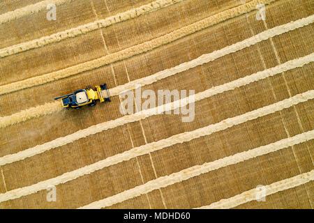 Antenne künstlerischen Blick direkt über eine Verwertungsgesellschaft kombinieren Linien von Getreide; Beiseker, Alberta, Kanada - Stockfoto