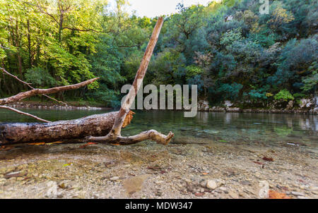 Schneiden Baum im Fluss Voidomatis in Zagorochoria, Epirus, GRIECHENLAND - Stockfoto