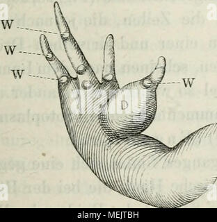 . Die Anatomie des Frosches: ein Handbuch,. - Stockfoto