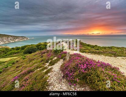 Lila Heidekraut Sonnenuntergang an der Küste, Alum Bay - Stockfoto