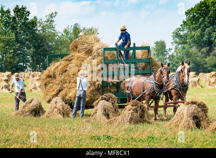Amish Männer Ernte von Hafer Riemenscheiben. Zwei Pferde ziehen einen Wagen. Holmes County, Ohio auf einer idyllischen Sommernachmittag. - Stockfoto