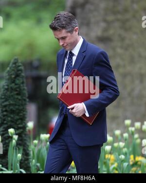 London, UK, 24. April 2018. Verteidigungsminister Gavin Williamson gesehen an einer Kabinettssitzung in Downing Street 10 - Stockfoto