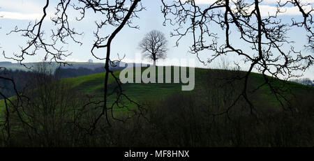Der Baum auf dem Hügel - Stockfoto