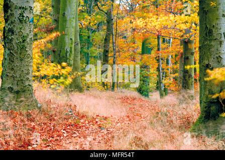 Berg Im Odenwald 9 Buchstaben