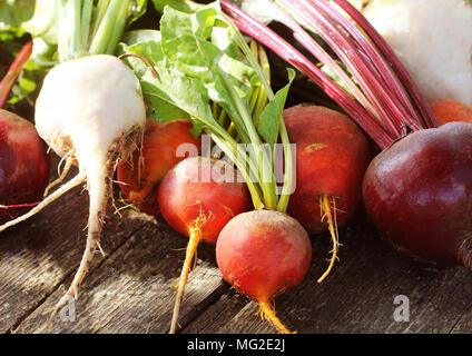 Frischen landwirtschaftlichen Bunte rote Bete auf einer hölzernen Hintergrund. Detox und Gesundheit. Selektive konzentrieren. Rot, golden, weiße Rüben. - Stockfoto