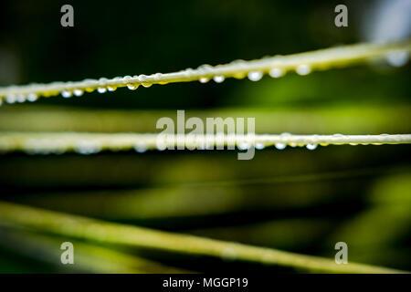 Close-up, flacher Fokus der Wassertropfen auf einem Kunststoff Kleidung Linie gesehen. Nach ein heftiger Platzregen während am späten Nachmittag im Frühling. - Stockfoto