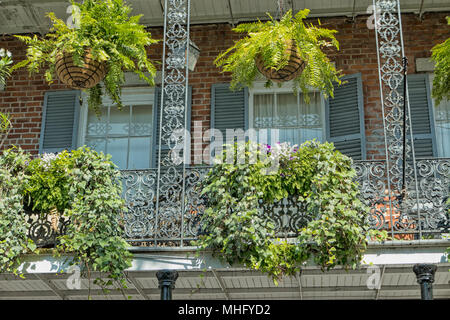 ein balkon mit h ngenden farnen im french quarter in new orleans stockfoto bild 10287438 alamy. Black Bedroom Furniture Sets. Home Design Ideas