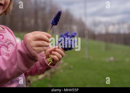 Ein kleines Mädchen hält einen Strauß lila Hyazinthen Blumen im Frühjahr. - Stockfoto