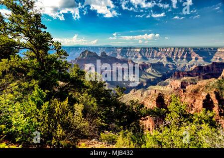 Blick von der North Rim des Grand Canyon auf der Südseite, grüne Bäume, tiefen Canyons unter einem blauen Himmel mit weißen flauschigen Wolken. - Stockfoto