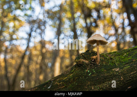 pilz pilz baum stamm flora pilze pilz pilz kork stiel stockfoto bild 143262252 alamy. Black Bedroom Furniture Sets. Home Design Ideas