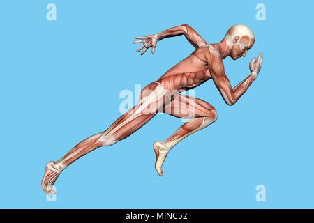 Muskeln der männlichen Anatomie in Bewegung - Stockfoto