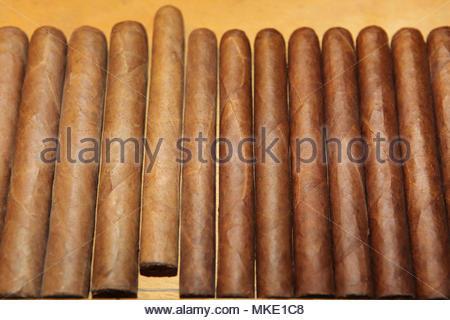 Zigarren auf der Werkbank der ein Arbeiter am LaFlor Dominicana Zigarrenfabrik in der Dominikanischen Republik. - Stockfoto