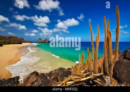 Bode Strand und Kaktus, Insel Fernando de Noronha, Brasilien - Stockfoto